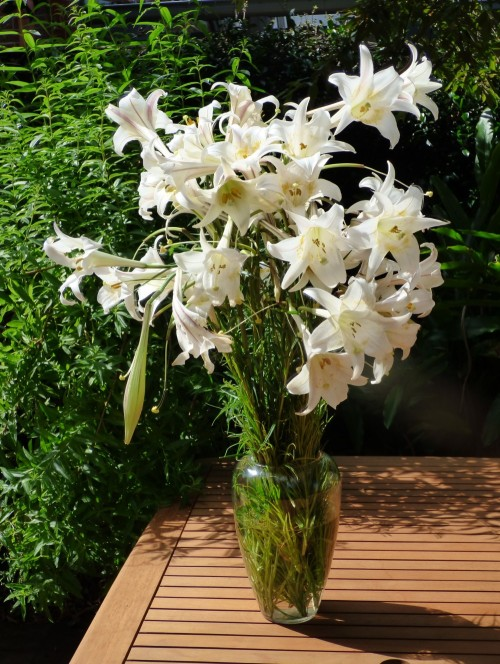 Lily1 (2)